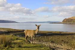 self catering holidays Scotland
