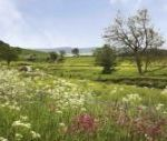 Burnfoot Holiday Cottages, Northumberland, England