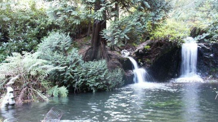 Woodland Waterfalls - Main Photo