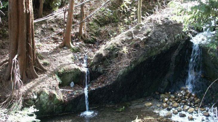 Woodland Waterfalls - Photo 2
