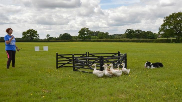 The Cotswold Manor Lodge, Exclusive Hot-Tub, Games/Event Barns, 70 acres of Parkland - Photo 17