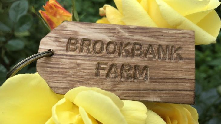 Brookbank Farm - Photo 15