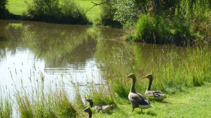 Stretton Lakes - Photo 14