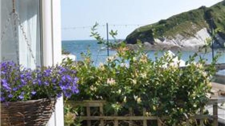 Dog Friendly Holiday Rentals In Ilfracombe